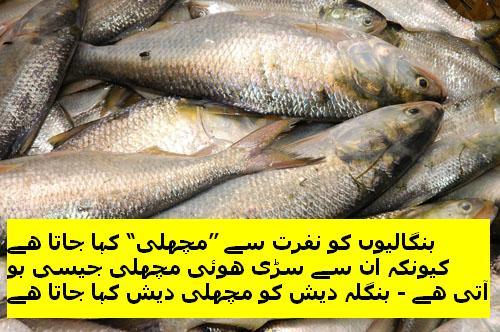 Wid_BD_U_Bangalis are Muchli