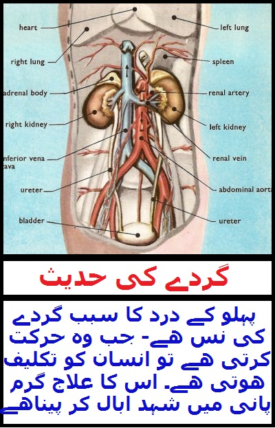 Wid_TN_U_Hadith of Kidney Pain