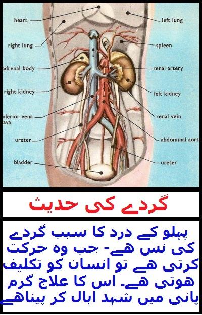 Wid_TN_U_Hadith of Kidney Pain