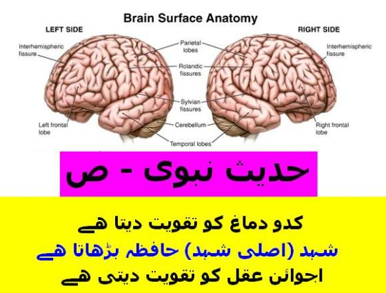 Wid_TN_U_Kadoo good for Brain